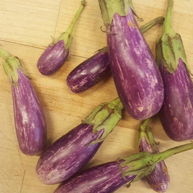 Fairytale eggplants about ready to bread for a limited editionhellip